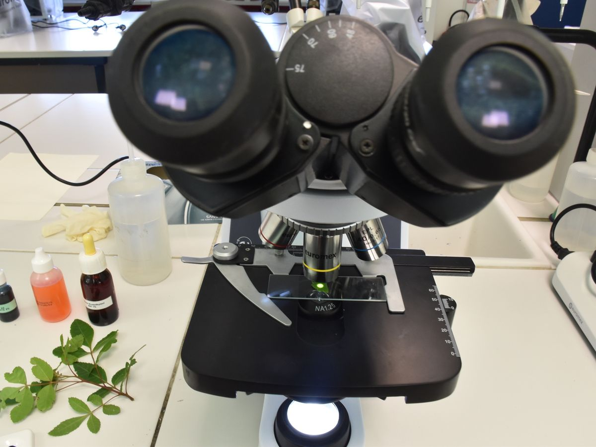 10 microscopes